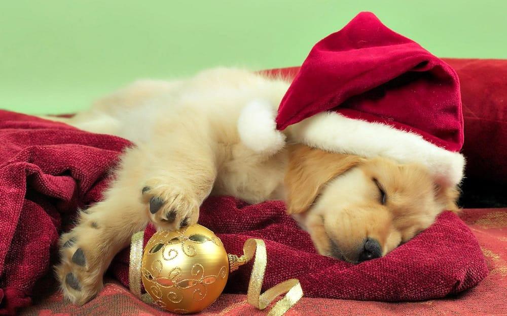 Mercatini di Natale Enpa: acquista un regalo e aiuta un cucciolo del canile